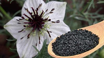 Nigella Sativa - масло от черен кимион