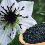 ползите от маслото от черен кимион